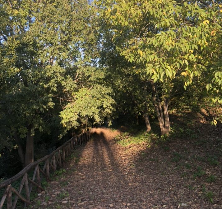 Cocci e Castagne: an Autumnal Roman jaunt in Testaccio with Agnes Crawford and Rachel Roddy. 25th October 2019