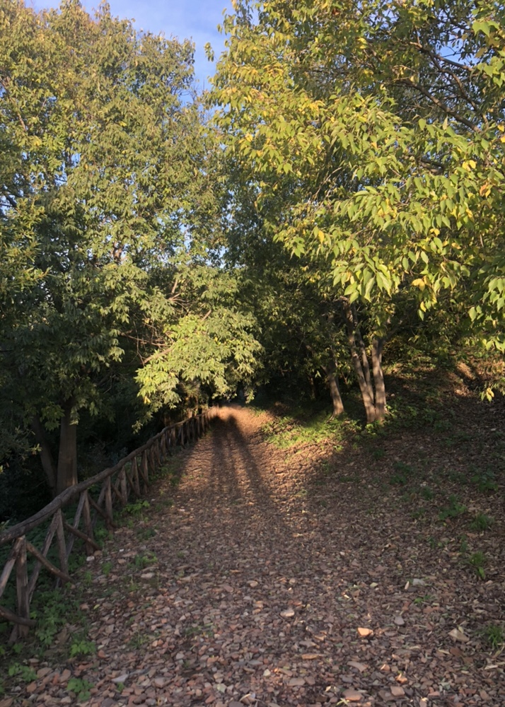 Cocci e Castagne, online. A live-streamed autumnal wander and chat through Testaccio with Agnes Crawford and Rachel Roddy. Thursday 19 November, 2020 at 3.30pm Rome time.